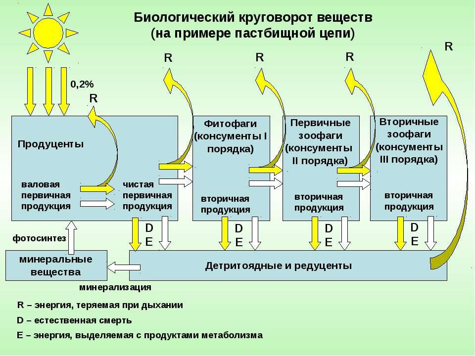 Продуценты Первичные зоофаги (консументы II порядка) Фитофаги (консументы I п...