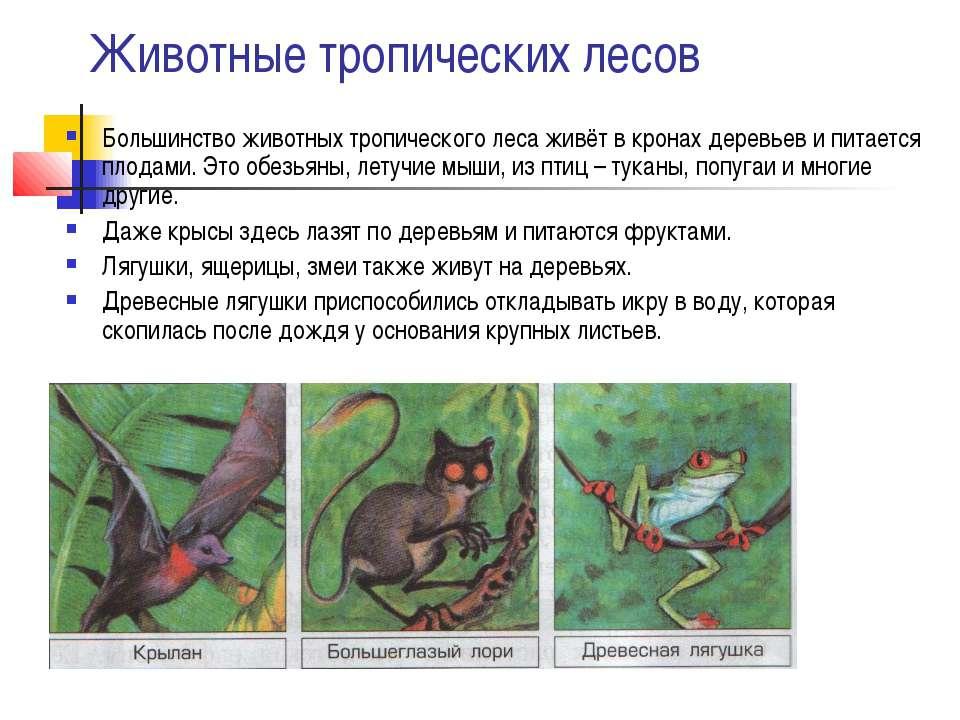 Животные тропических лесов Большинство животных тропического леса живёт в кро...