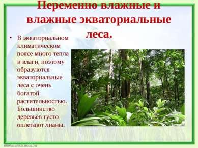 Переменно влажные и влажные экваториальные леса. В экваториальном климатическ...