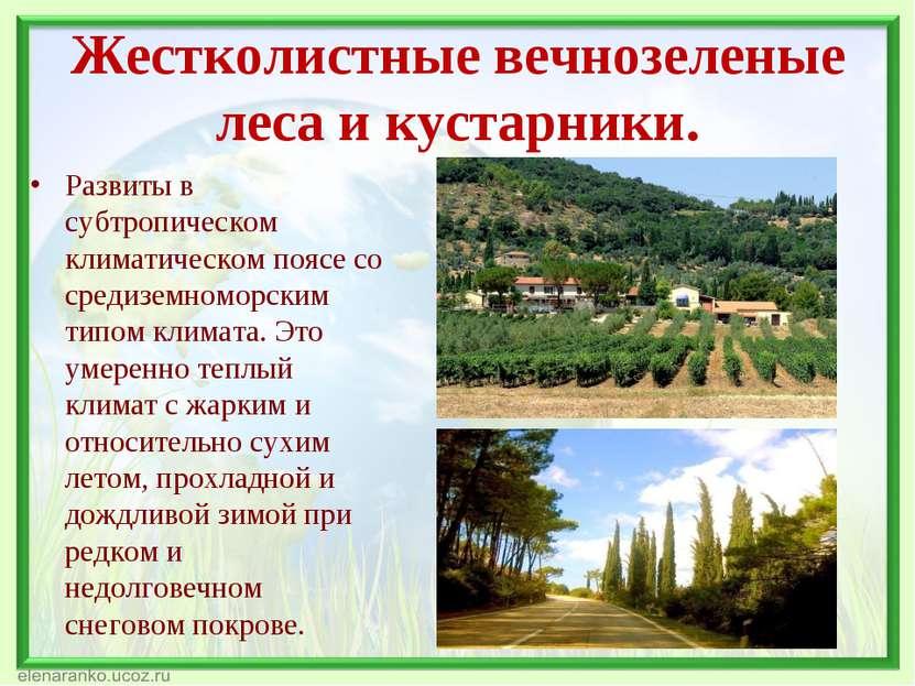 Жестколистные вечнозеленые леса и кустарники. Развиты в субтропическом климат...