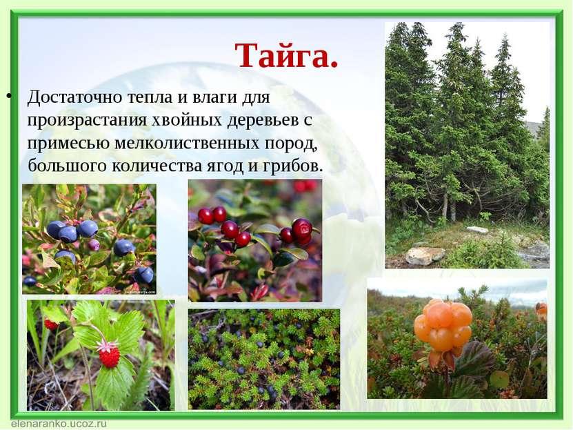 Тайга. Достаточно тепла и влаги для произрастания хвойных деревьев с примесью...