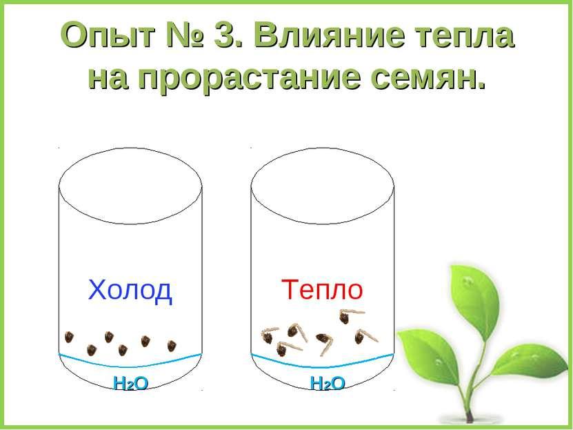 Опыт № 3. Влияние тепла на прорастание семян. Холод Тепло Н2О Н2О
