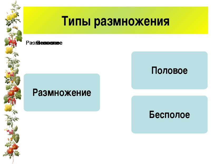 Типы размножения