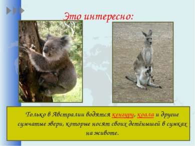 Это интересно: Только в Австралии водятся кенгуру, коала и другие сумчатые зв...