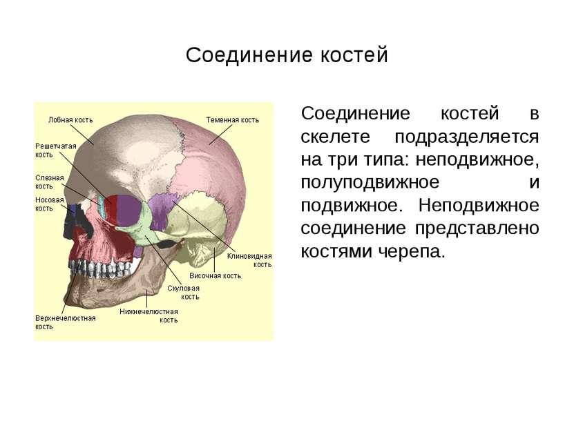 Соединение костей Соединение костей в скелете подразделяется на три типа: неп...