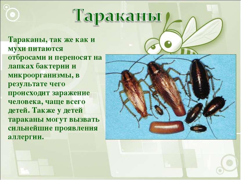Тараканы, так же как и мухи питаются отбросами и переносят на лапках бактерии...