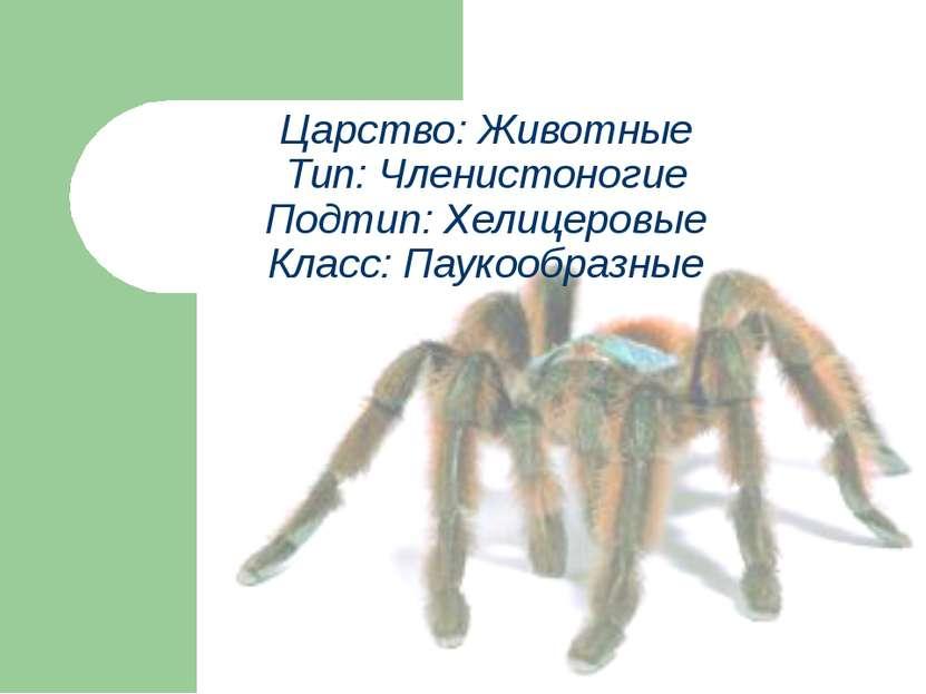 Царство: Животные Тип: Членистоногие Подтип: Хелицеровые Класс: Паукообразные