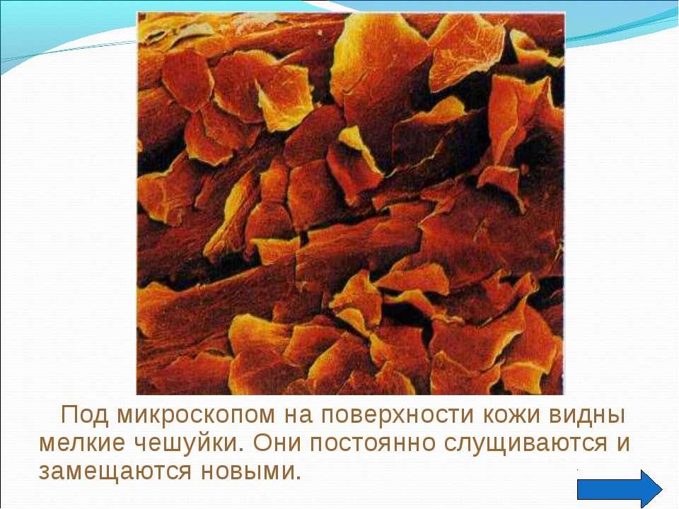 Под микроскопом на поверхности кожи видны мелкие чешуйки. Они постоянно слущи...