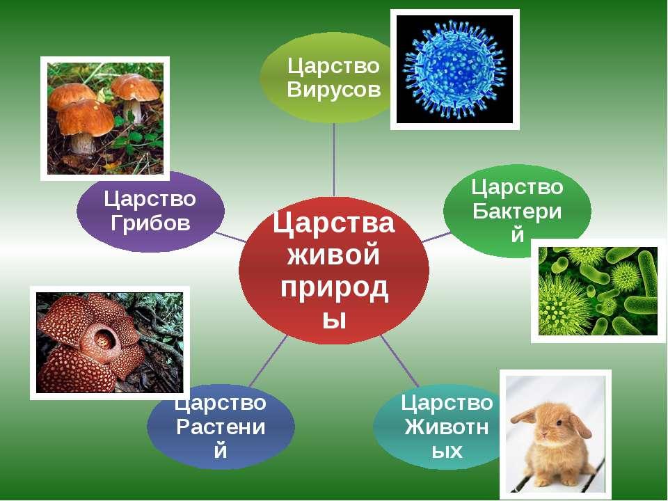 Царства живой природы Царство Вирусов Царство Бактерий Царство Животных Царст...