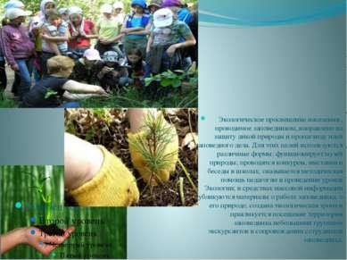 Экологическое просвещение населения , проводимое заповедником, направлено на ...