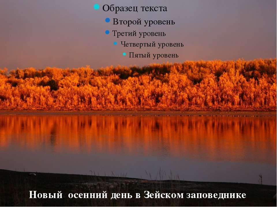 Новый осенний день в Зейском заповеднике