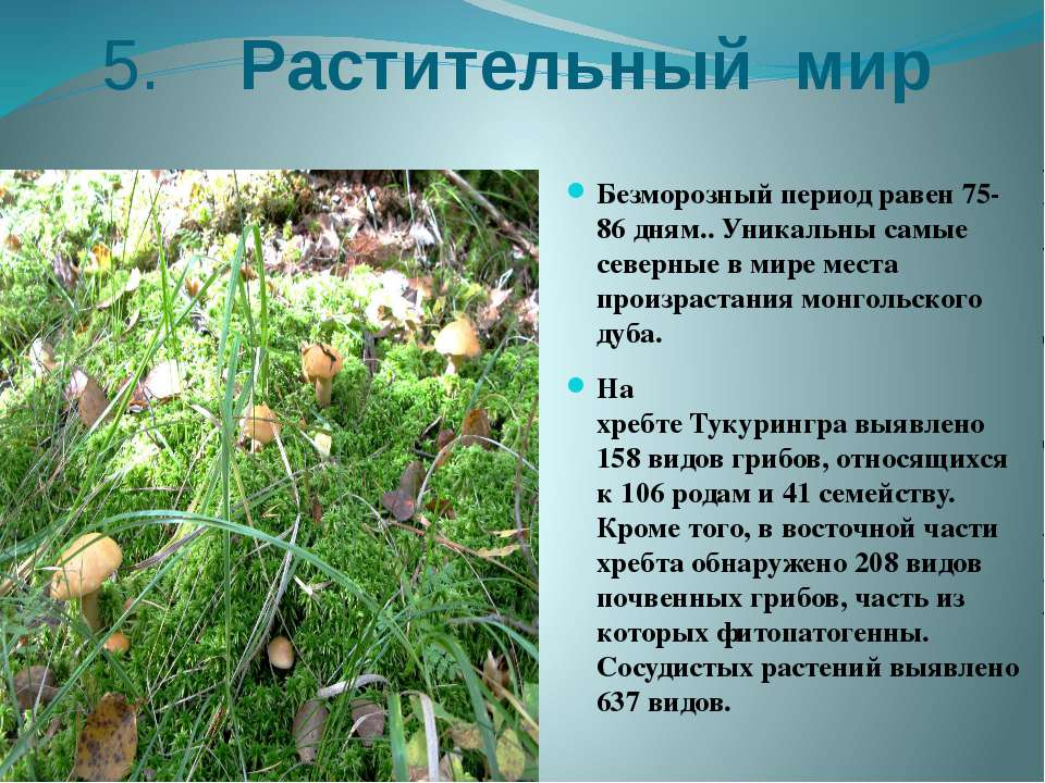 5. Растительный мир Безморозный периодравен 75-86 дням.. Уникальны самые сев...