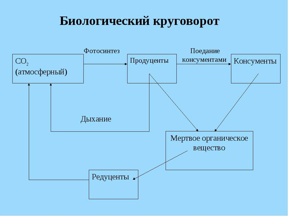 Биологический круговорот