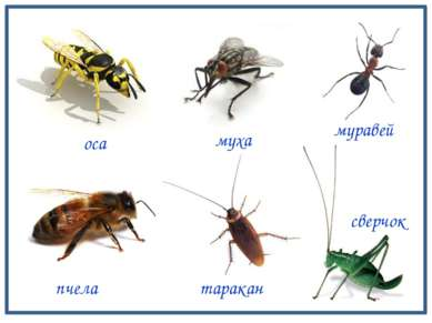 оса сверчок таракан пчела муравей муха