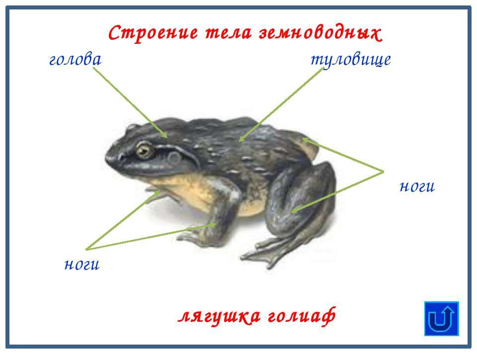 Пресмыкающиеся – надземные животные, тело которых покрыто сухой кожей с рогов...