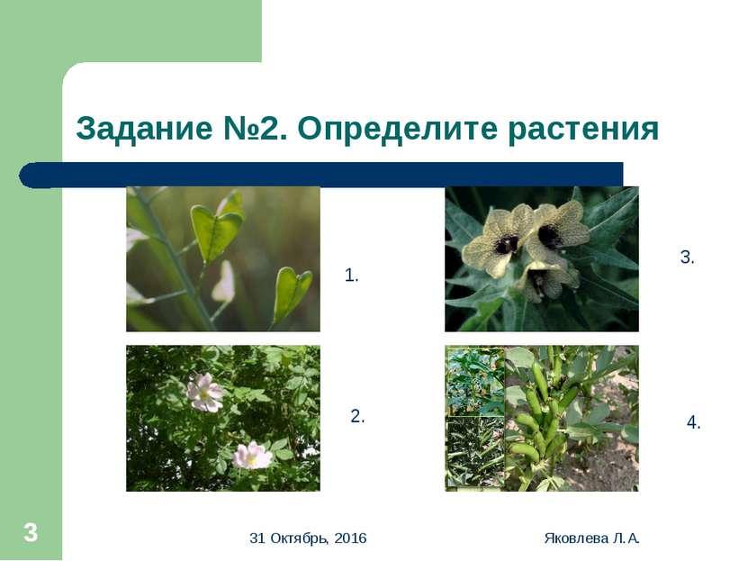 * Яковлева Л.А. * Задание №2. Определите растения 1. 2. 3. 4. Яковлева Л.А.