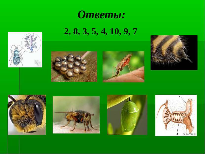 Ответы: 2, 8, 3, 5, 4, 10, 9, 7