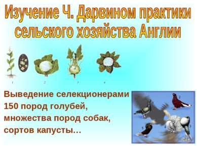 Выведение селекционерами 150 пород голубей, множества пород собак, сортов кап...