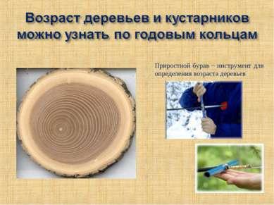 Приростной бурав – инструмент для определения возраста деревьев