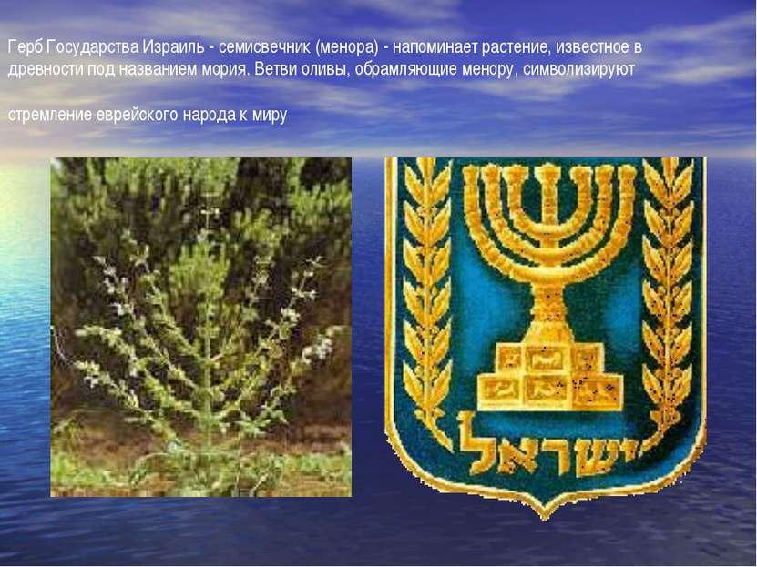 Герб Государства Израиль - семисвечник (менора) - напоминает растение, извест...