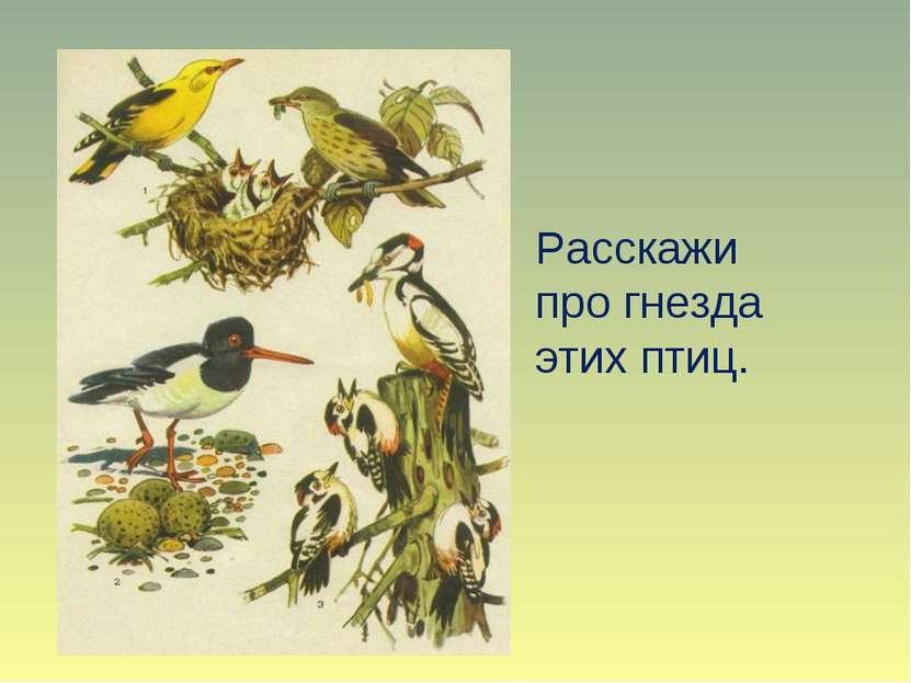Расскажи про гнезда этих птиц.