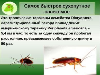 Самое быстрое сухопутное насекомое Это тропические тараканы семейства Dictyop...