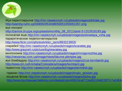 Жук перистокрылка http://mir-nasekomyh.ru/uploads/images/ptiliidae.jpg http:/...