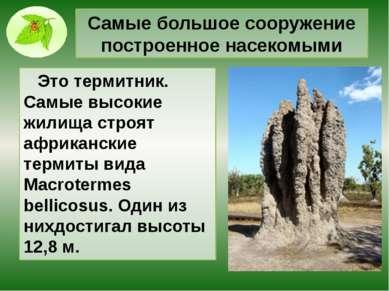 Самые большое сооружение построенное насекомыми Это термитник. Самые высокие ...