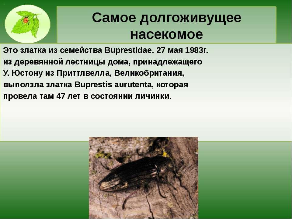 Самое долгоживущее насекомое Это златка из семейства Buprestidae. 27 мая 1983...
