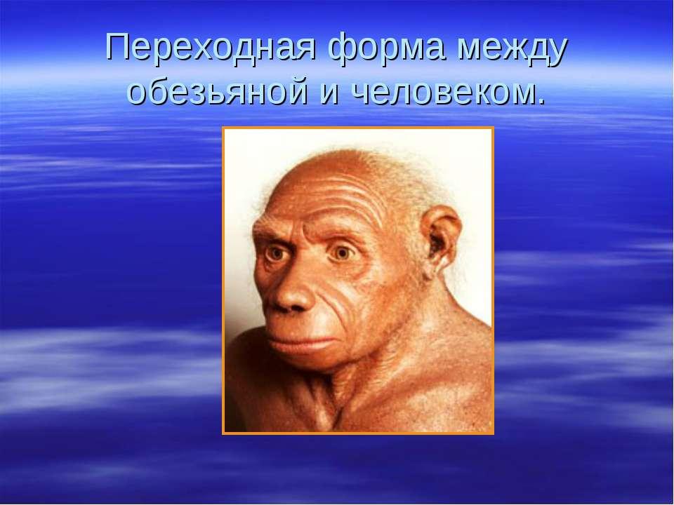 Переходная форма между обезьяной и человеком.