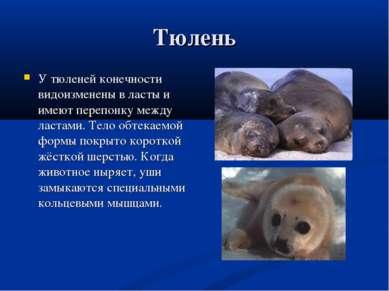 Тюлень У тюленей конечности видоизменены в ласты и имеют перепонку между ласт...