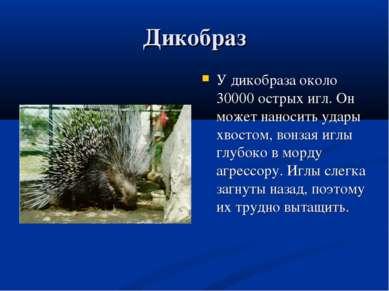 Дикобраз У дикобраза около 30000 острых игл. Он может наносить удары хвостом,...