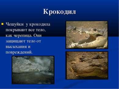 Крокодил Чешуйки у крокодила покрывают все тело, как черепица. Они защищают т...
