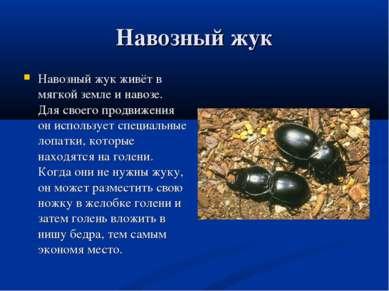 Навозный жук Навозный жук живёт в мягкой земле и навозе. Для своего продвижен...