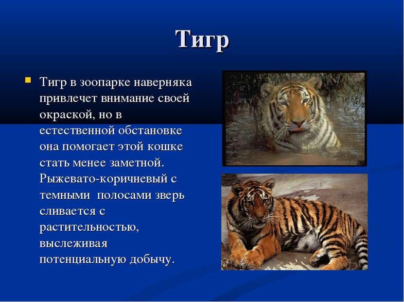 Тигр Тигр в зоопарке наверняка привлечет внимание своей окраской, но в естест...