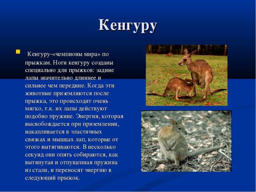 Кенгуру Кенгуру-«чемпионы мира» по прыжкам. Ноги кенгуру созданы специально д...