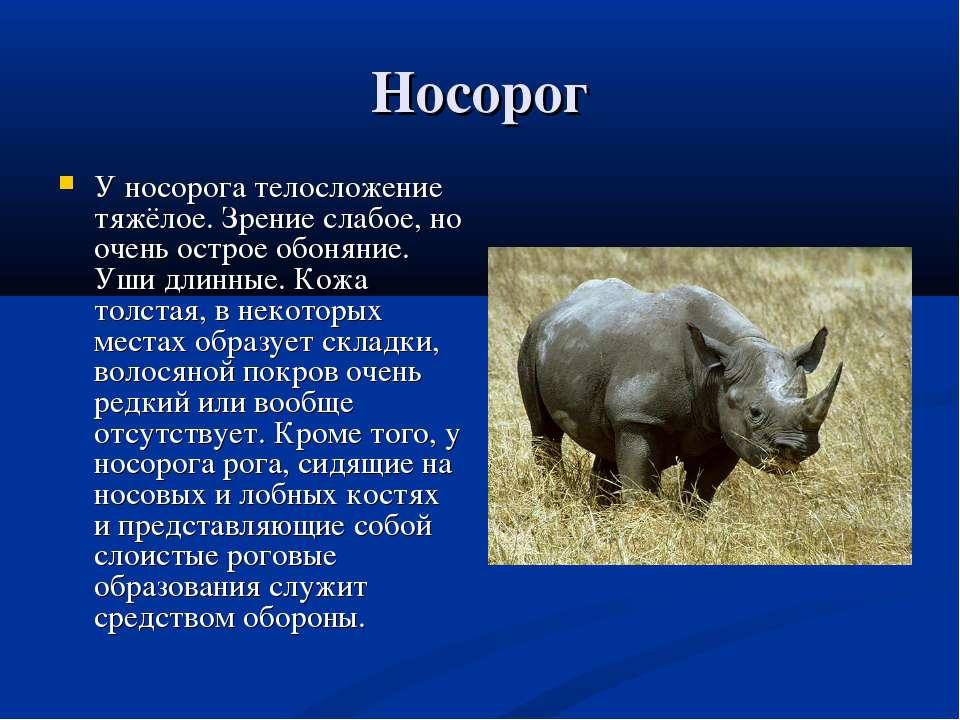 Носорог У носорога телосложение тяжёлое. Зрение слабое, но очень острое обоня...