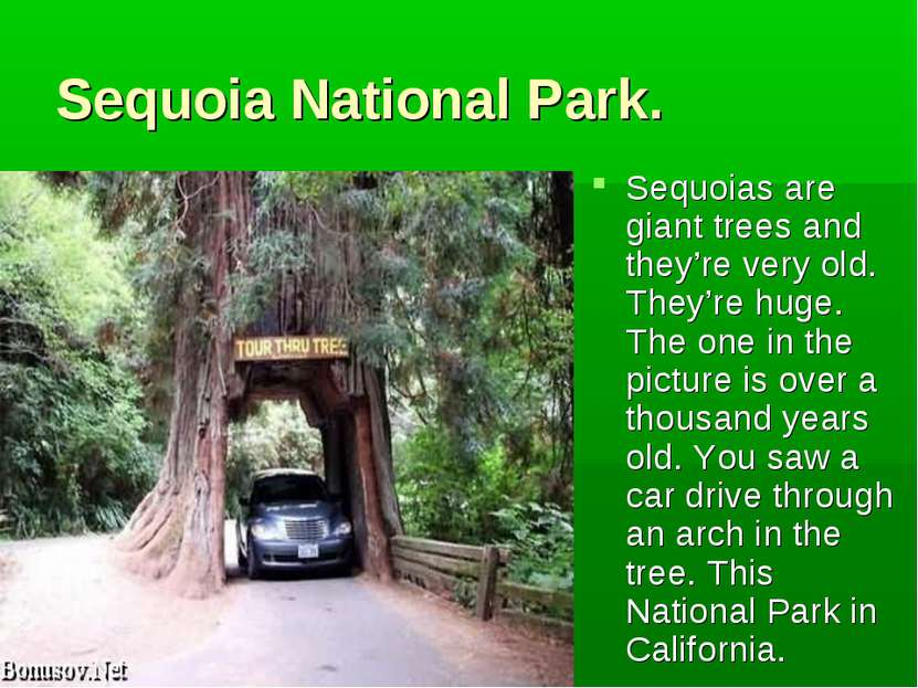 Sequoia National Park. Sequoias are giant trees and they're very old. They're...