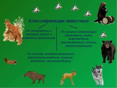 Классификация животных По отношению к человеку (дикие и домашние животные) По...