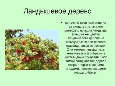 Ландышевое дерево получило свое название из-за сходства запаха его цветков с ...
