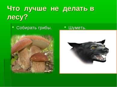 Что лучше не делать в лесу? Собирать грибы. Шуметь.