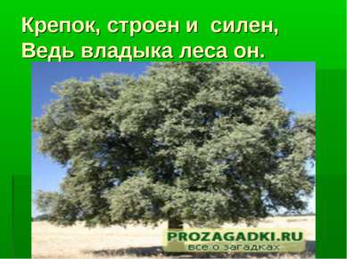 Крепок, строен и силен, Ведь владыка леса он.