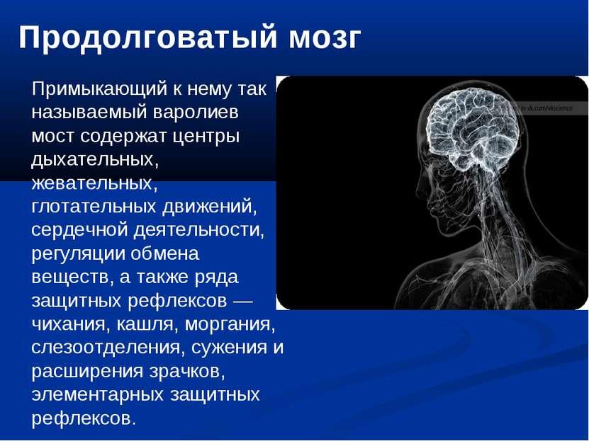 Продолговатый мозг Примыкающий к нему так называемый варолиев мост содержат ц...
