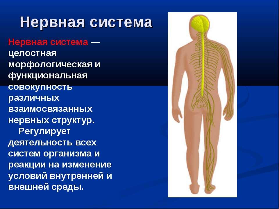 Нервная система Нервная система — целостная морфологическая и функциональная ...