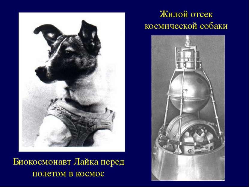 Биокосмонавт Лайка перед полетом в космос Жилой отсек космической собаки