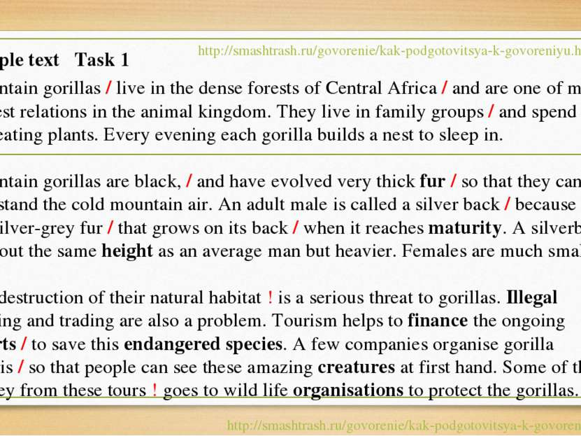 Mountain gorillas / live in the dense forests of Central Africa / and are one...