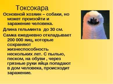 Токсокара Основной хозяин – собаки, но может произойти и заражение человека. ...