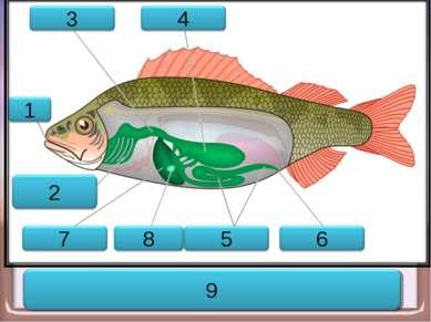 Пищеварительная система рыбы