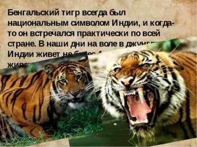 Бенгальский тигр всегда был национальным символом Индии, и когда-то он встреч...