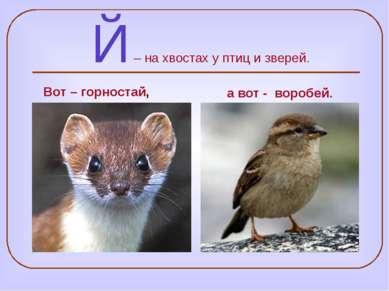 Й – на хвостах у птиц и зверей. а вот - воробей. Вот – горностай,